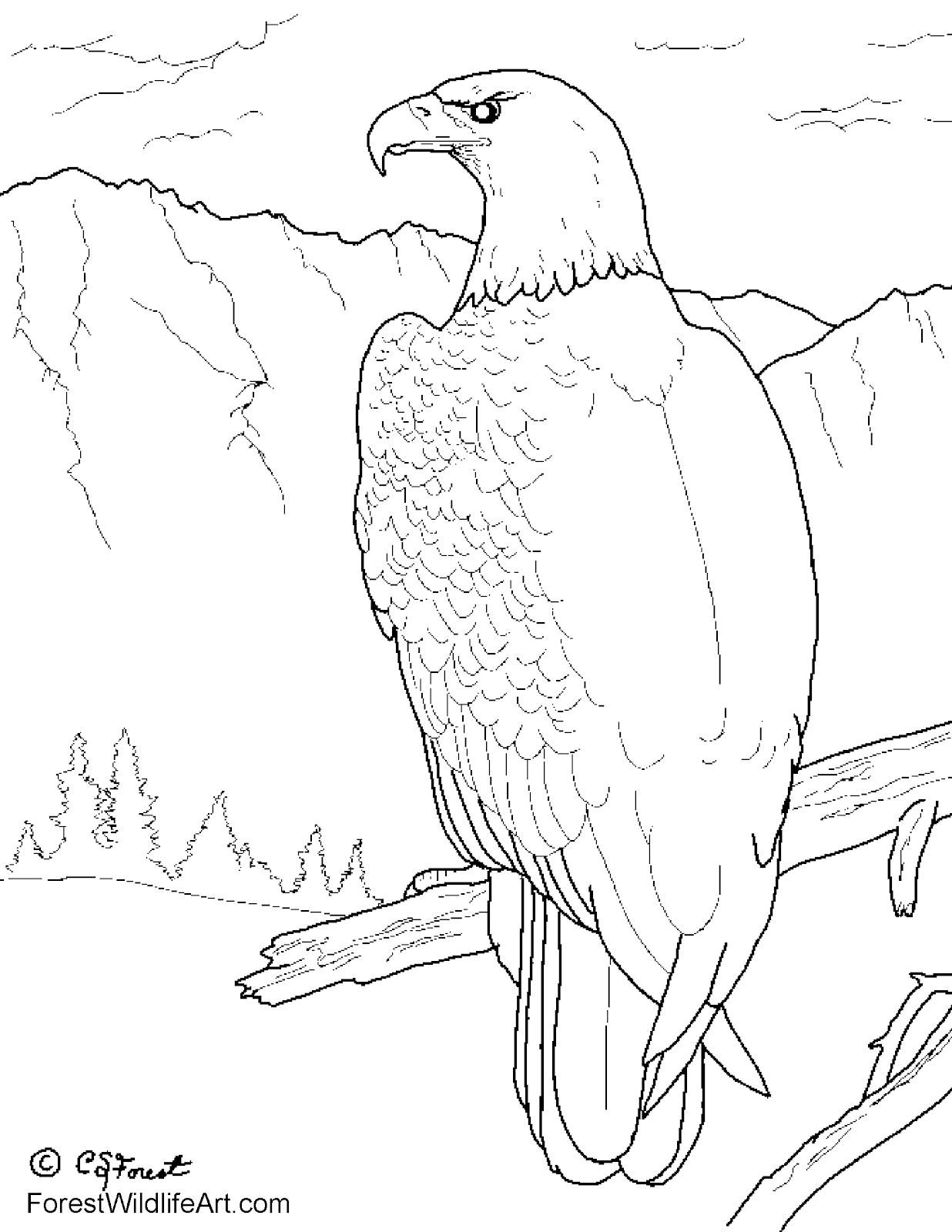 1236x1600 Drawn Bald Eagle Coloring Book