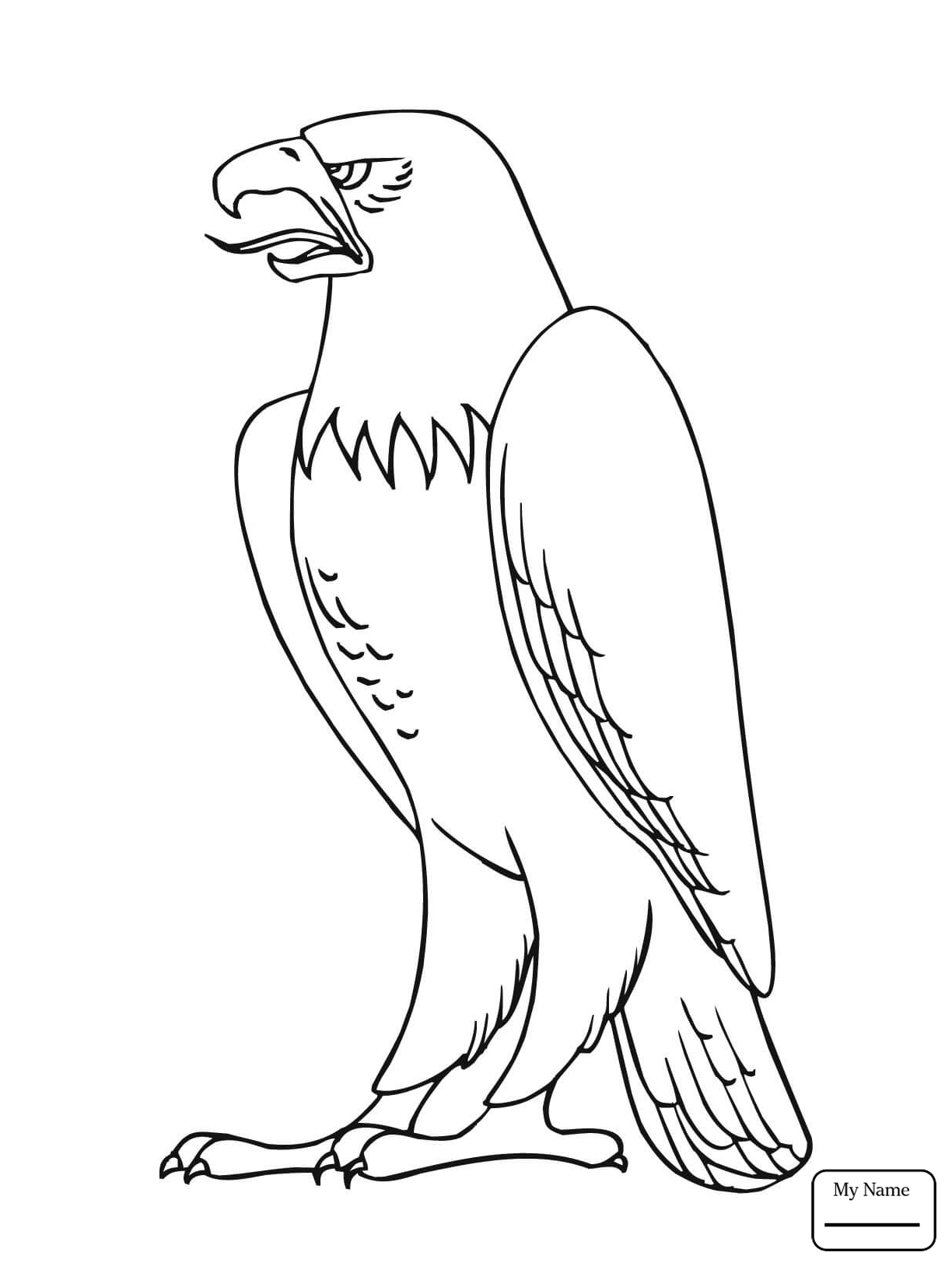 phillipine eagle coloring pages - photo#20