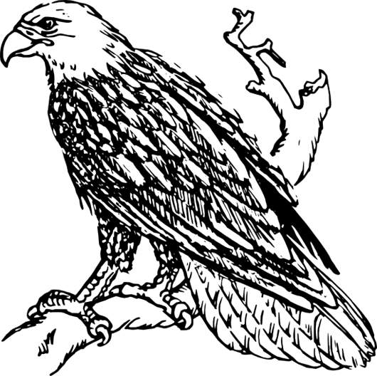 phillipine eagle coloring pages - photo#19