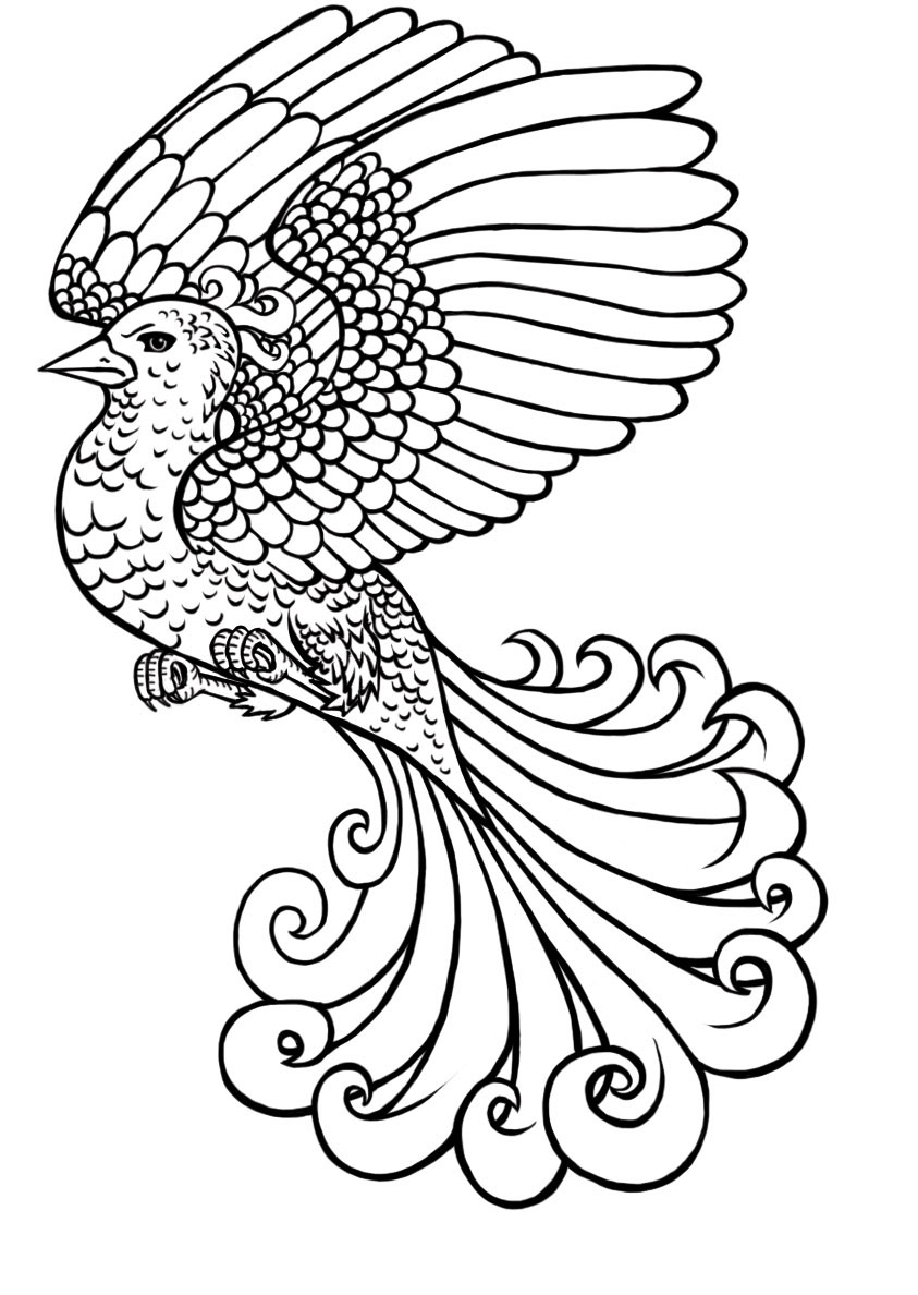 843x1188 Mythical Creatures Colouring Book On Behance