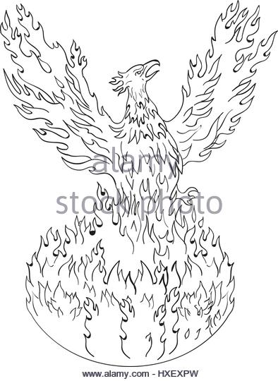 394x540 Phoenix Bird Black And White Stock Photos Amp Images