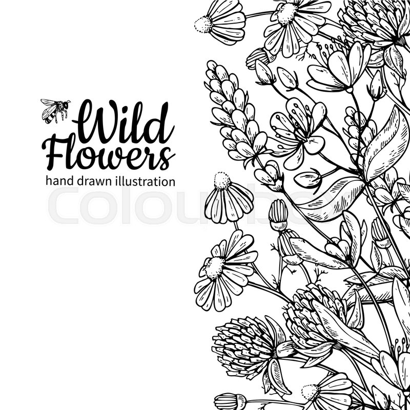 800x800 Wild Flowers Vector Drawing Set. Isolated Meadow Plants And Leaves