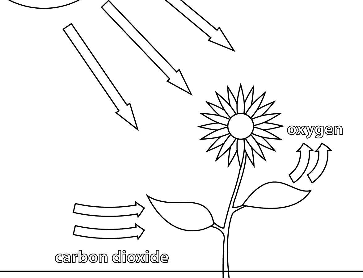 Photosynthesis drawing at getdrawings free for personal use 1175x900 photosynthesis for kids worksheets ccuart Gallery
