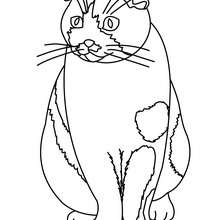 220x220 Cat Picasso Coloring Pages