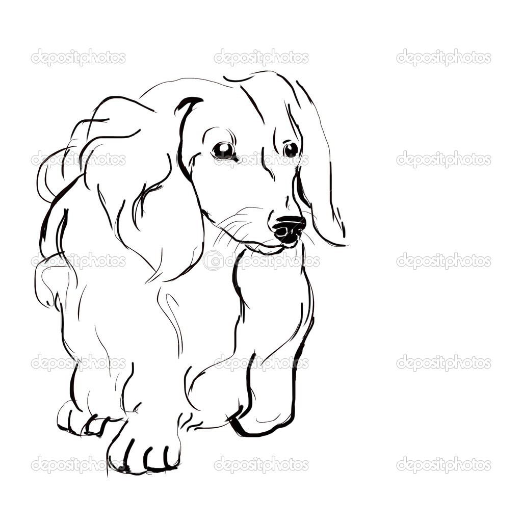 1024x1024 Long Haired Dachshund Drawing And Painting Long