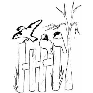 300x300 Birds On Fence Coloring Page