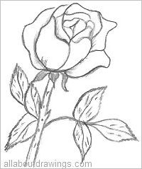 Picture Of A Rose Drawing