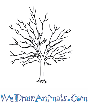 300x350 How To Draw A Sycamore Tree