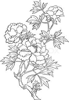 223x320 Japanese Flowers Drawings