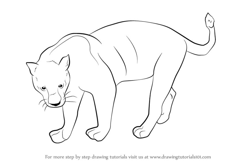 800x566 Learn How To Draw A Black Panther (Wild Animals) Step By Step