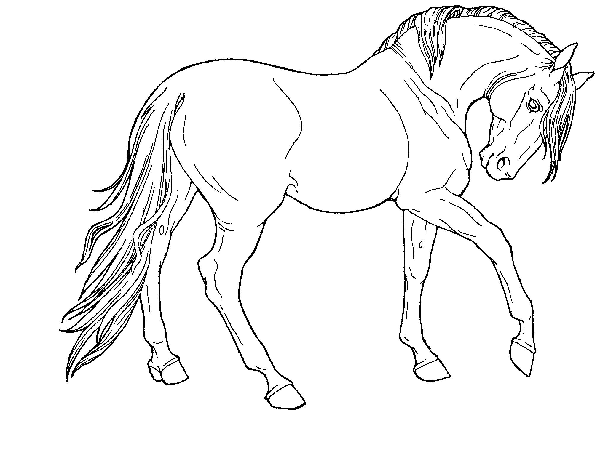 2024x1563 Wild Animals Drawing Wild Animals Drawing Easy