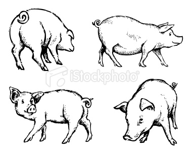 380x302 Hand Drawn Illustration Of Some Pigs In A Few Different Poses