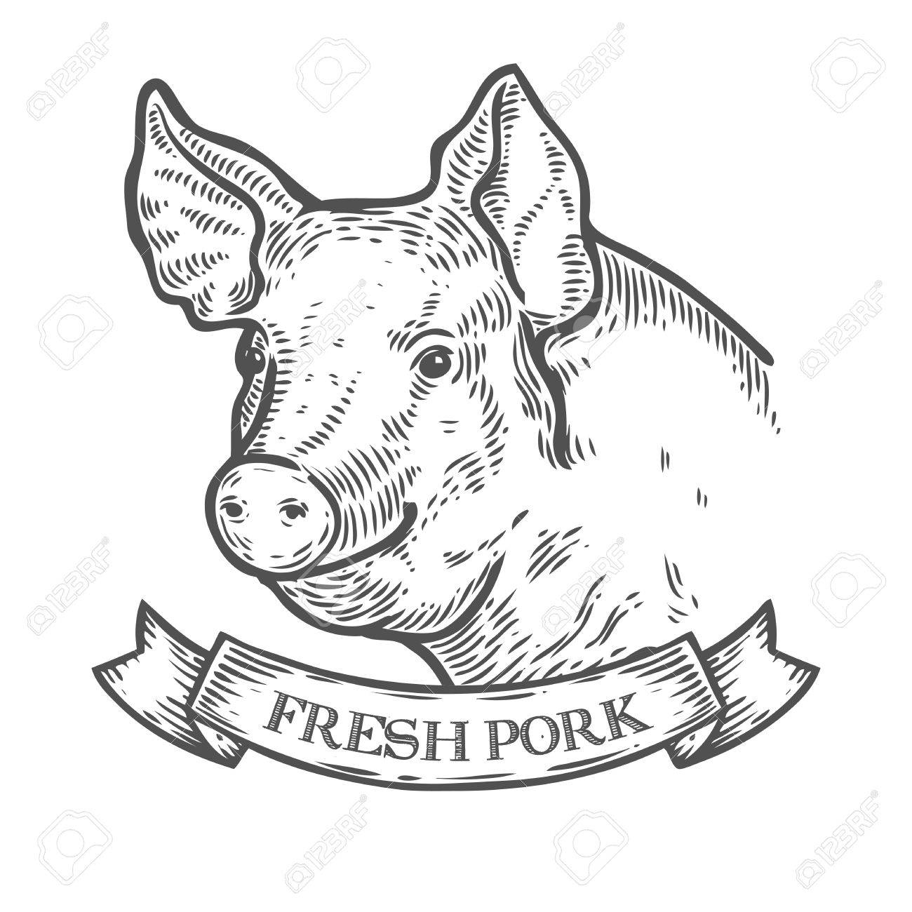 1300x1300 Pig Head, Fresh Pork Organic Meat. Hand Drawn Sketch In A Graphic