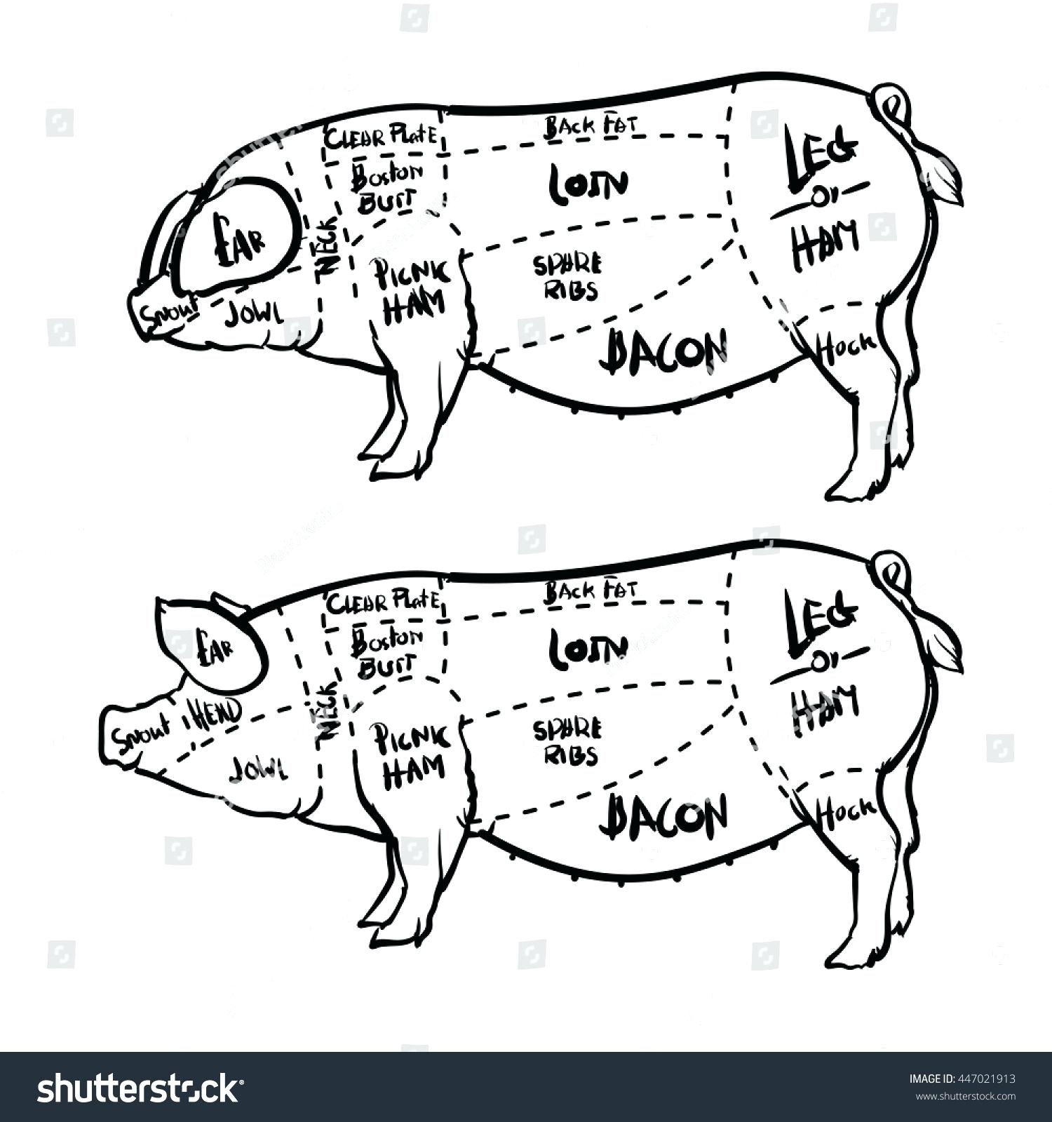Pig Butcher Drawing At Free For Personal Use Cut Diagram 1500x1600 Pork Cuts And Butchery Set Hand Drawn