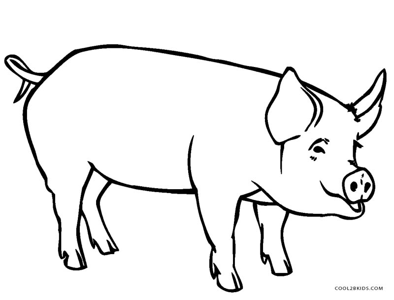 800x609 Free Printable Pig Coloring Pages For Kids Cool2bkids