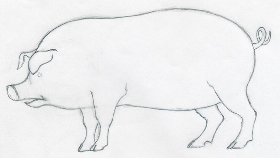 951x539 How To Draw A Pig