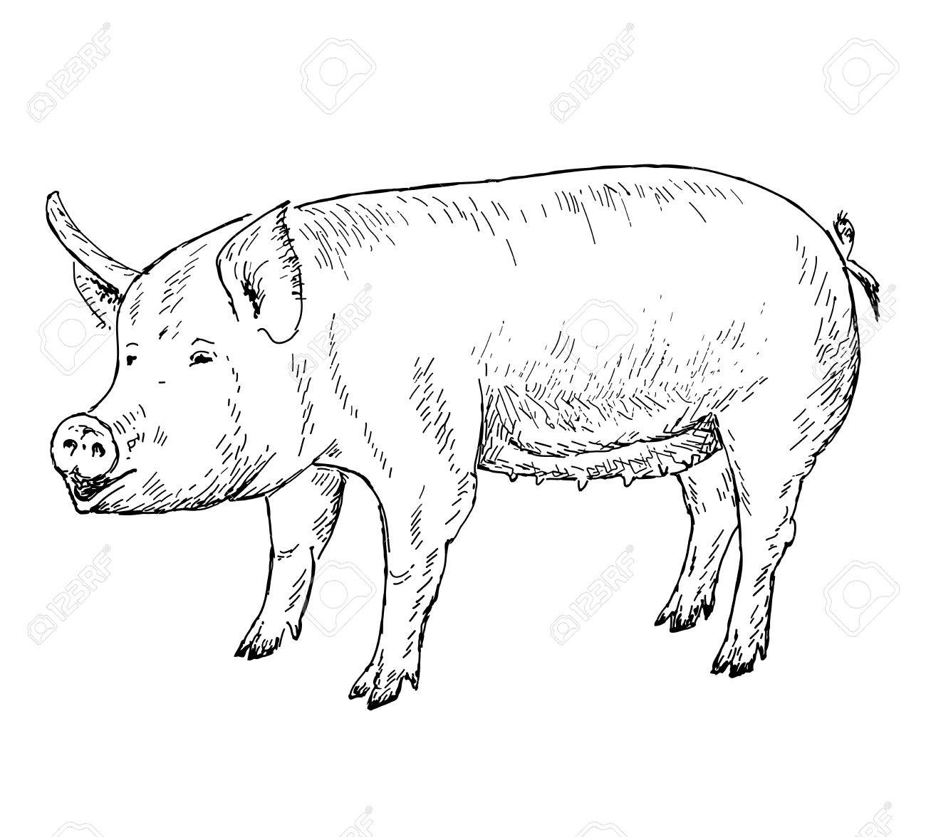 1300x1176 Pig Hands Drawing Royalty Free Cliparts, Vectors, And Stock