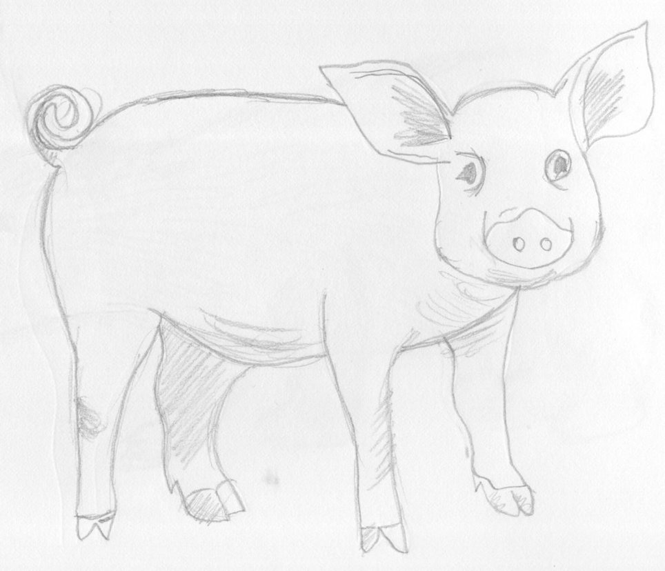 Line Drawing Of A Pig Face : Pig drawing at getdrawings free for personal use