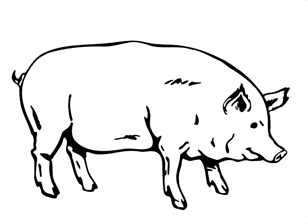 1045x761 Pig Face Coloring Pages For Kids