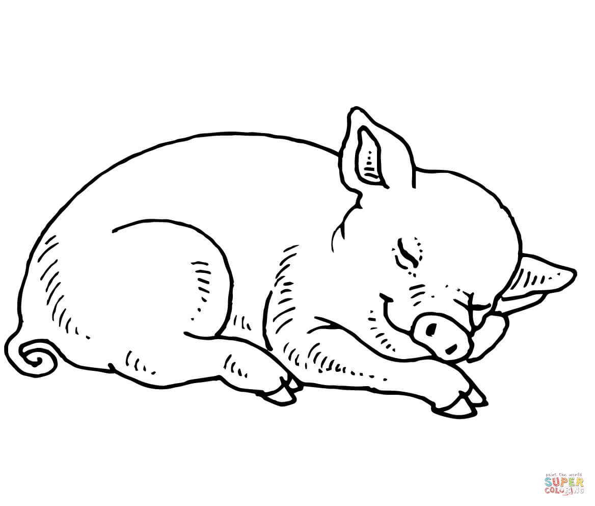 1168x992 Sleeping Baby Pig Coloring Page Free Printable Coloring Pages