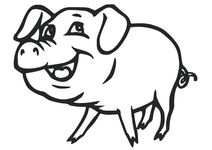 875x620 Coloring Page Pig