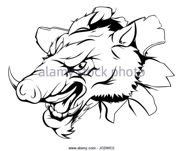 640x528 Illustration Angry Wild Pig Boar Stock Photos Amp Illustration Angry