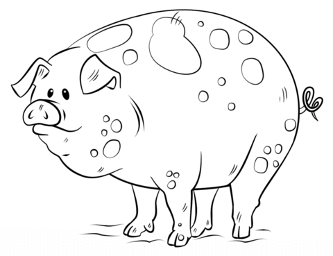 Pig head drawing at free for personal for Realistic pig coloring pages
