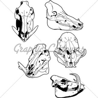 325x325 Wild Boar Head Gl Stock Images