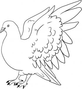 The Best Free Pigeon Drawing Images Download From 50 Free Drawings