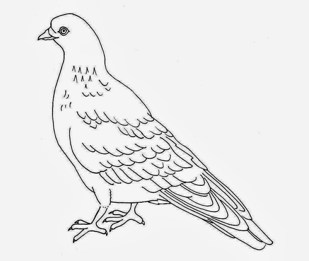 1020x864 Colour Drawing Free Wallpaper Pigeon Coloring Drawing Free Wallpaper