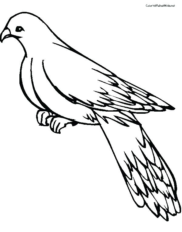 600x763 Pigeon Coloring Sheet Best Mo Images On Pertaining To Mo Pigeon