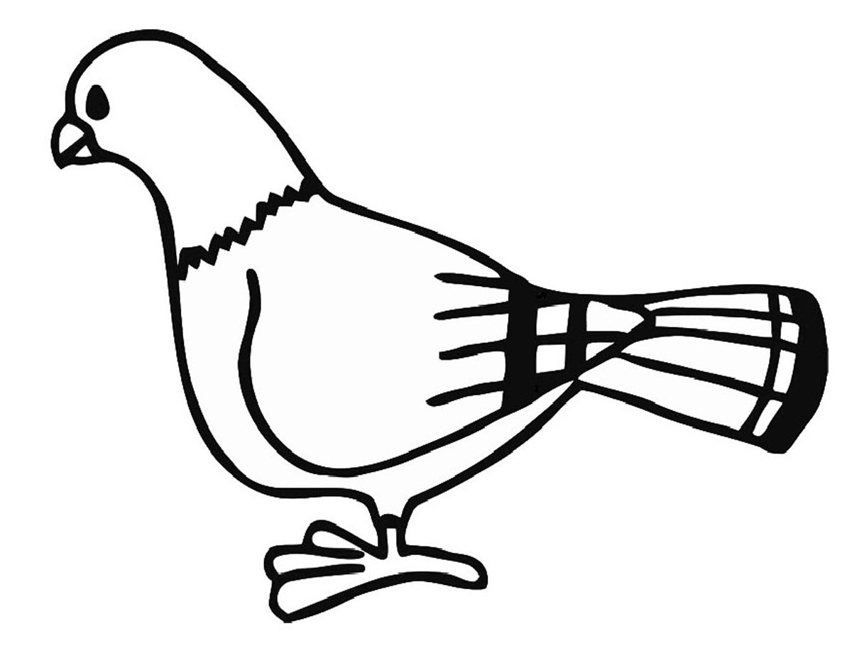Pigeon Pencil Drawing at GetDrawings.com | Free for personal use ...