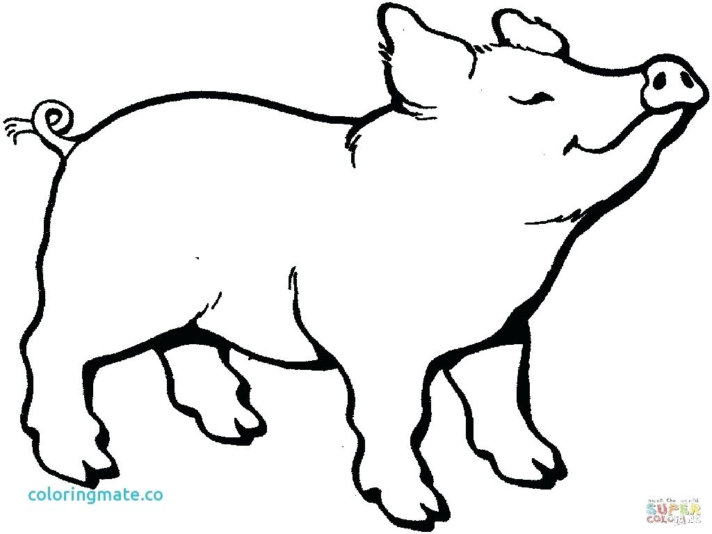 1024x768 Coloring Baby Piglet Coloring Pages How To Draw Step By Miss