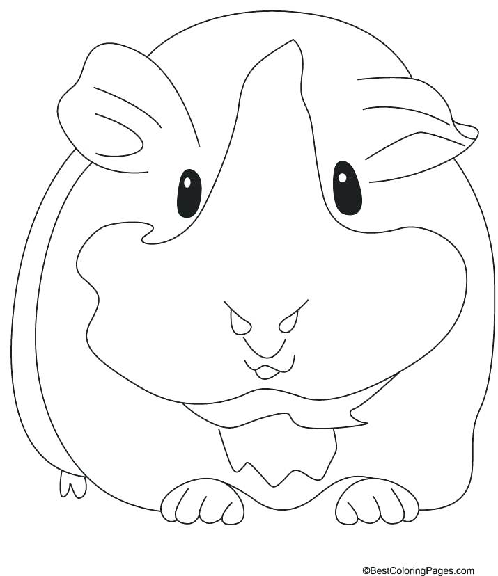 715x828 Coloring Pages Of Guinea Pigs Cute Guinea Pig Coloring Pages Best