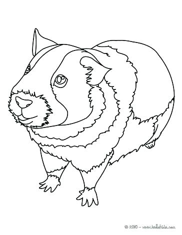 364x470 Coloring Pages Of Guinea Pigs Nzherald.co