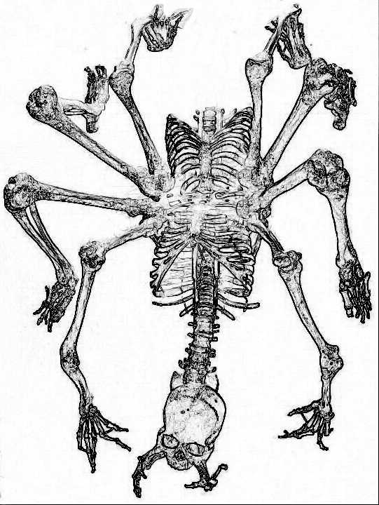 541x720 Raging Owlbear Dampd 5e Bone Swarm Skeleton