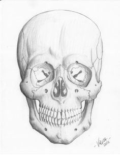 236x305 A Realistic Charcoal Drawing Of A Human Skull