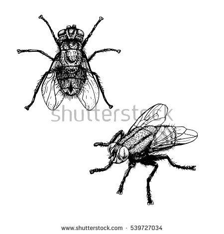 450x470 Drawn Bugs Sketch