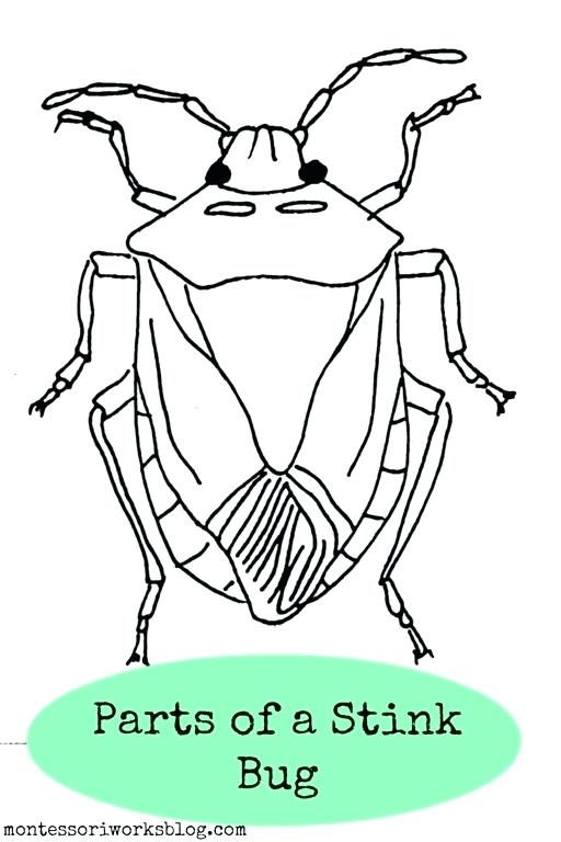 Pill Bug Drawing At Getdrawings Free For Personal Use Pill Bug