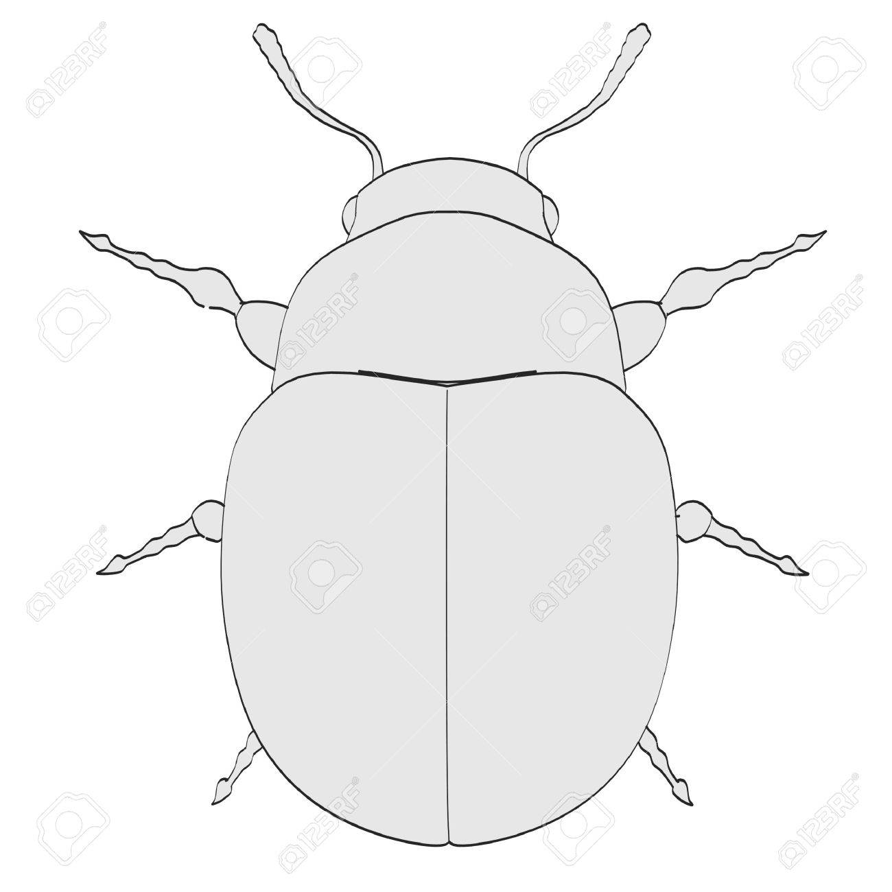 1300x1300 Cartoon Image Of Potato Beetle Stock Photo, Picture And Royalty