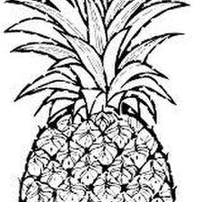 225x225 How To Draw A Pineapple 9 Steps (With Pictures)