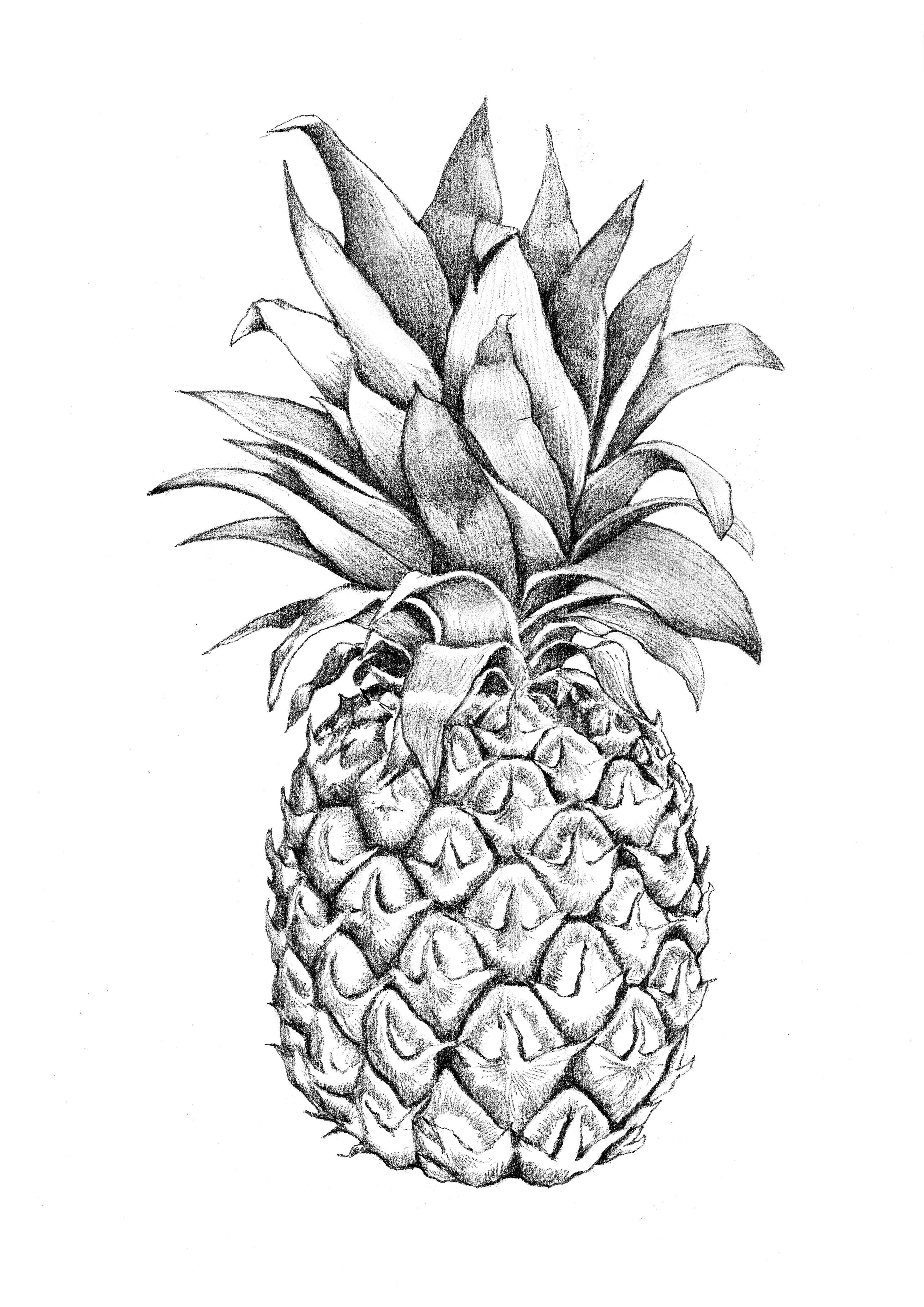 3543x5011 Images For Gt Pineapple Graphic Design Pineapples