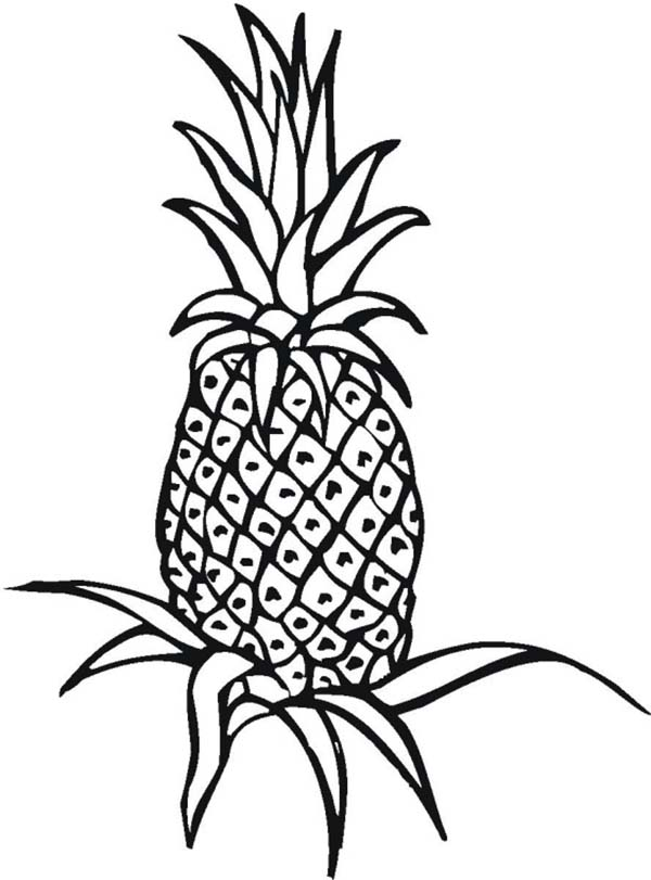 600x811 An Unripe Pineapple Plant On The Field Coloring Page