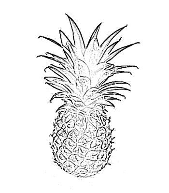 350x399 Pineapple Fruit Sketch