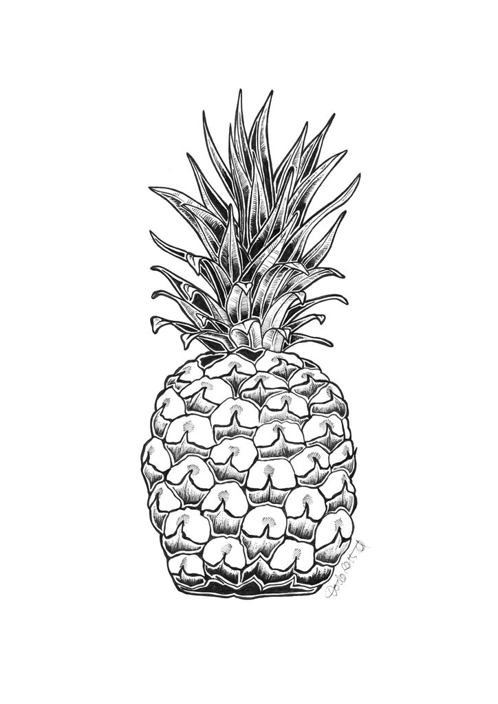 724x1024 Pineapple Ink Drawing A4 Print Diedododa