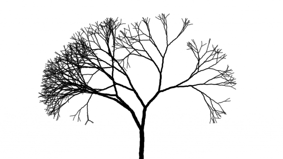 570x320 Drawings Of Trees With Branches Pencil Drawing Of Four Sparrows