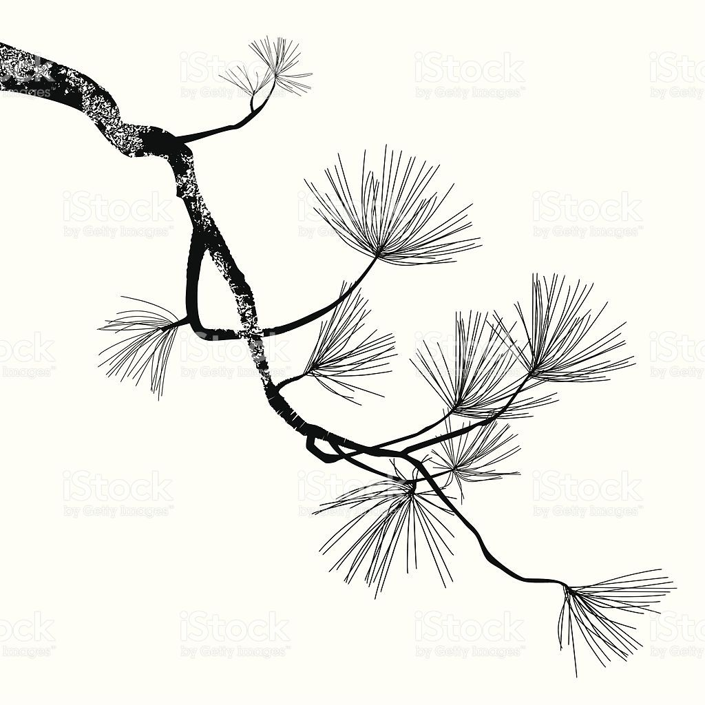 1024x1024 Illustration Of The Pine Branch Can Be Easy Change To Another