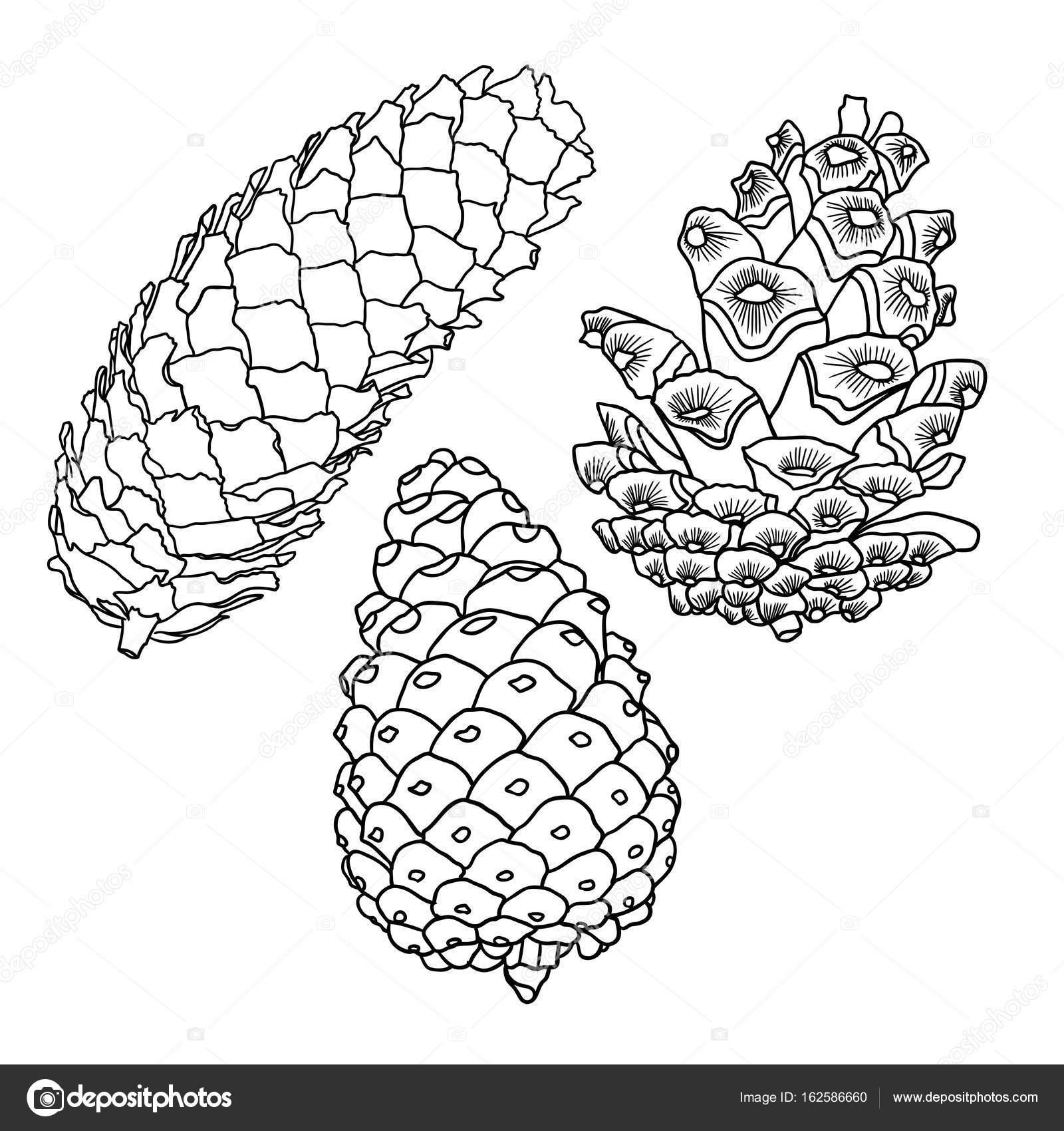 1600x1700 Sketch Hand Drawn Pine Cones Stock Vector Goldenshrimp