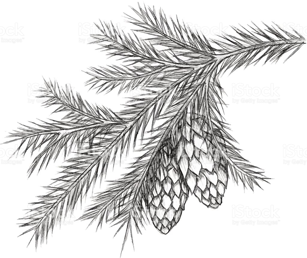 1024x861 Pine Cone Christmas Drawings Festival Collections
