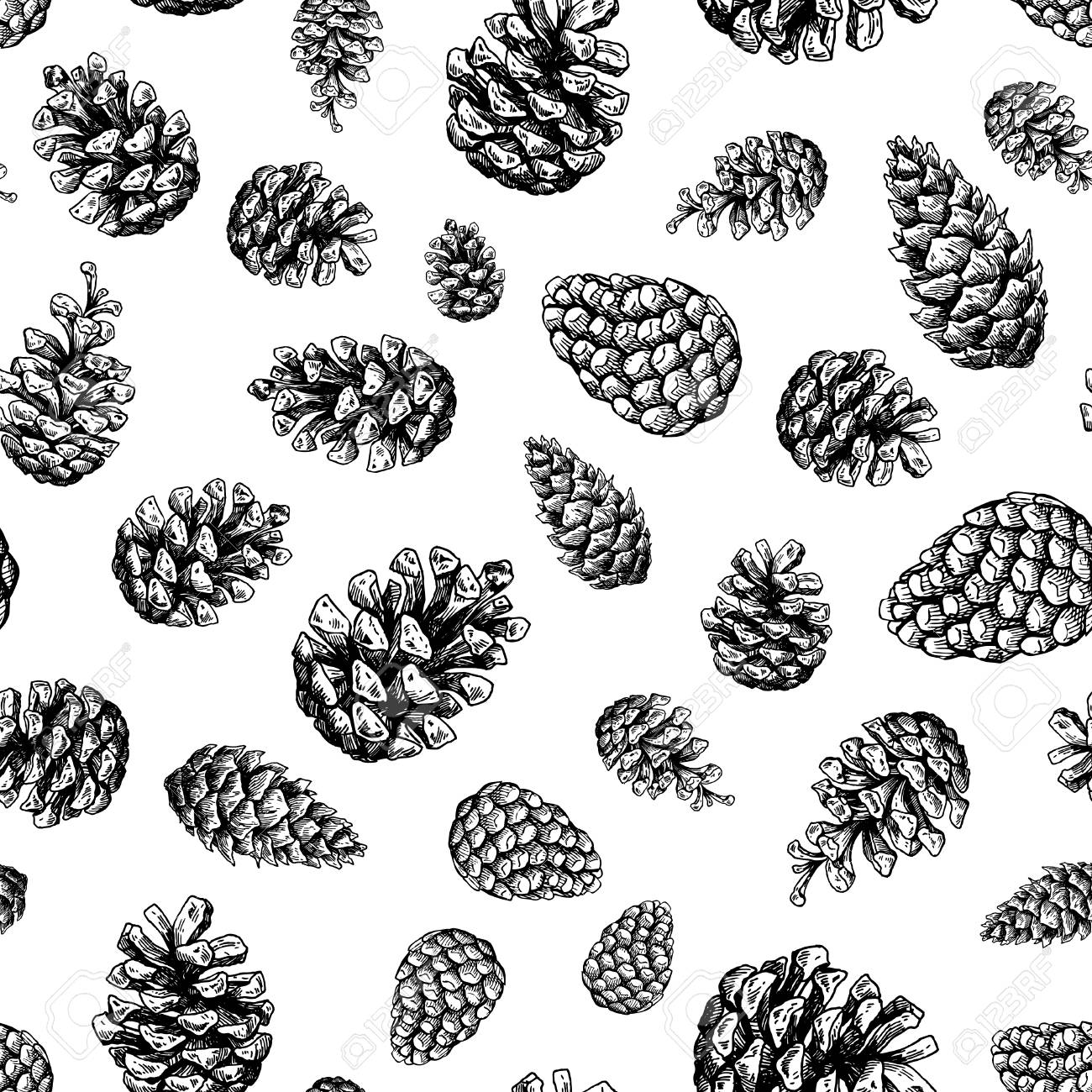 1300x1300 Pine Cone Seamless Pattern. Botanical Hand Drawn Vector Background